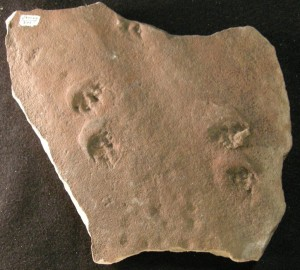 Fossil footprints